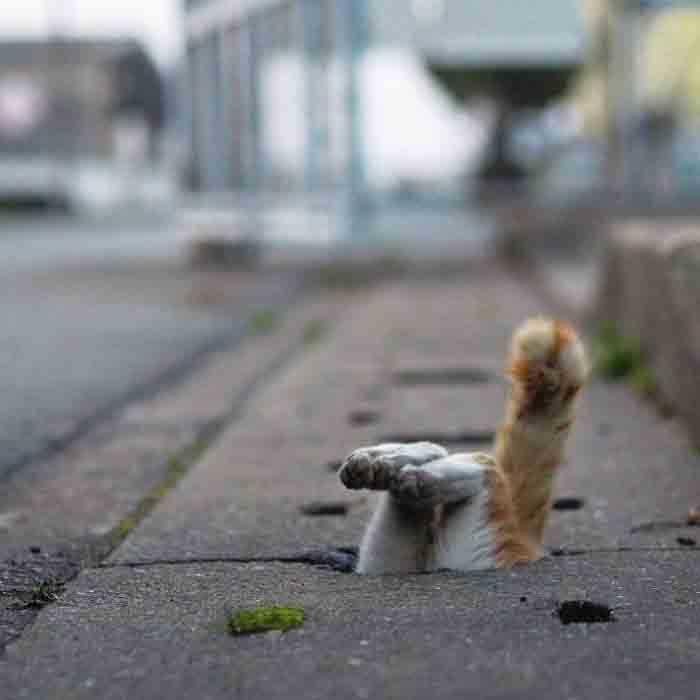 Fotógrafo registra gatinhos de rua buracos