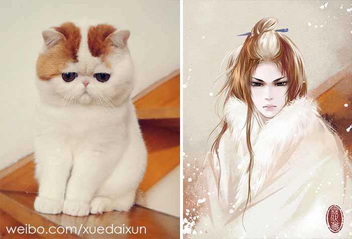 gatos e donos
