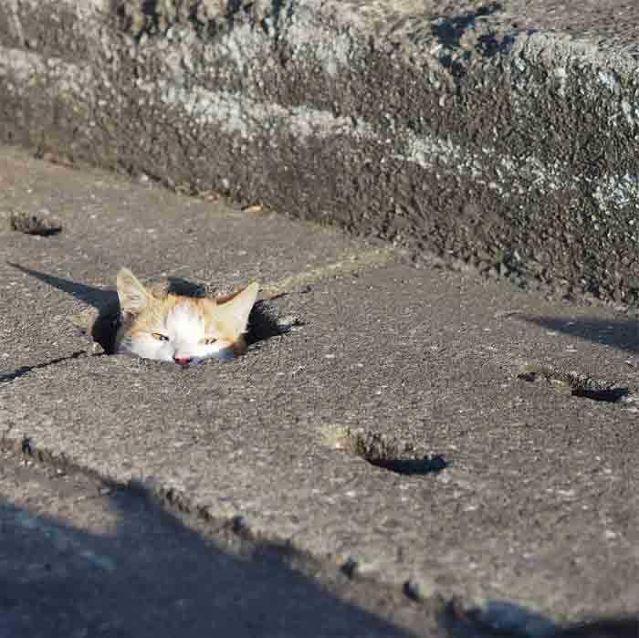 Fotógrafo registra gatinhos de rua engraçados
