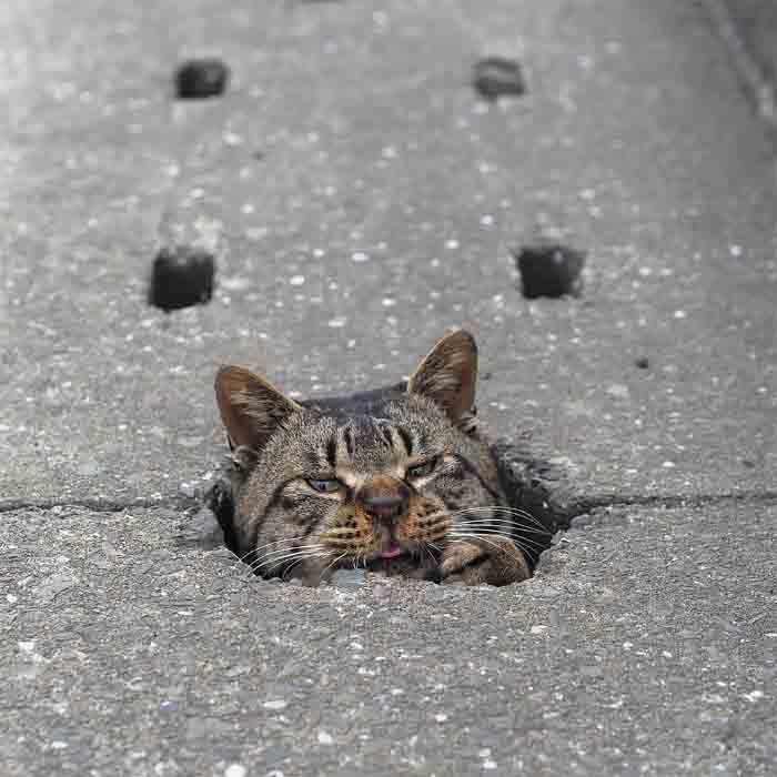 gatos gostam de buracos
