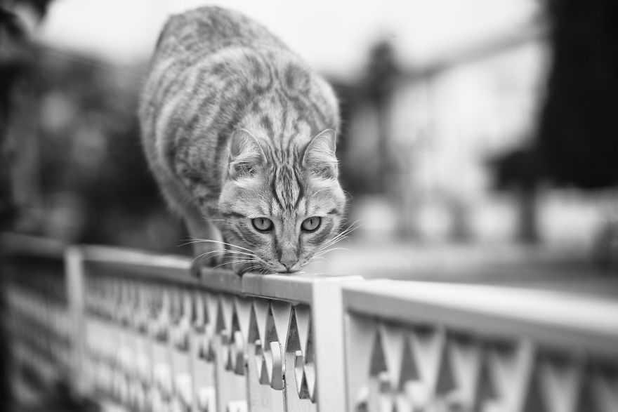 gatos imagens