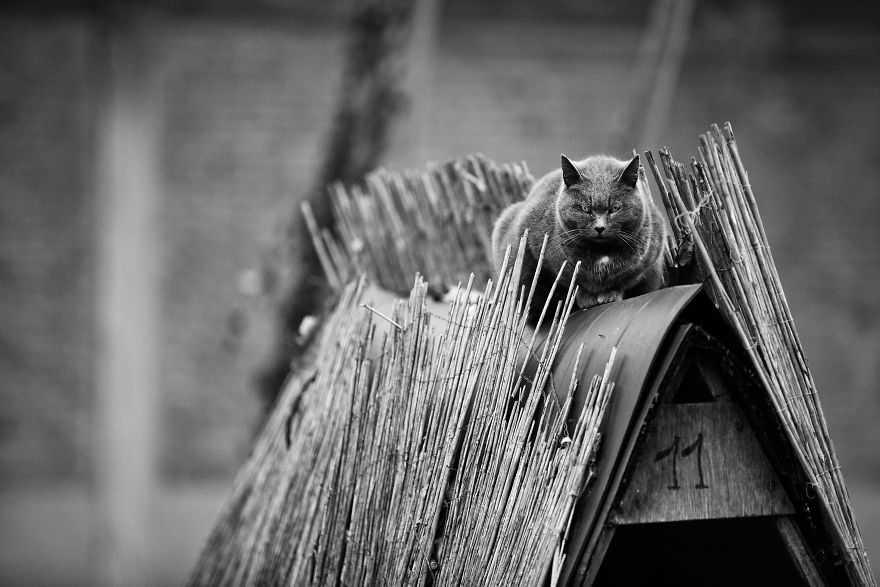 gatos lindos fotos