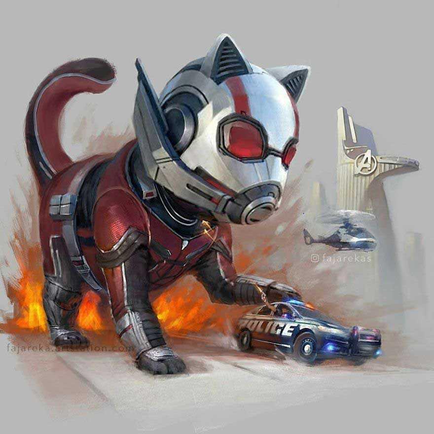 gatos marvel dc
