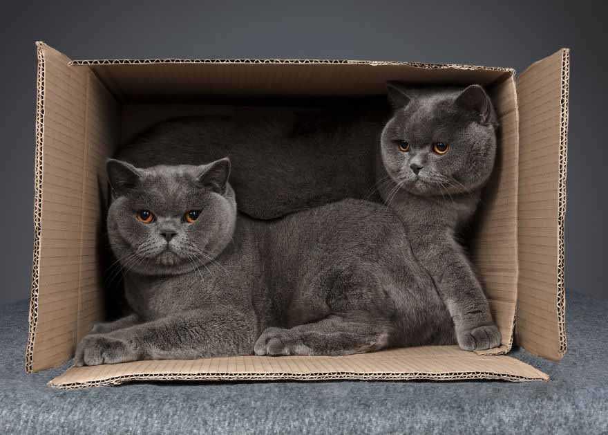 gatos na caixa