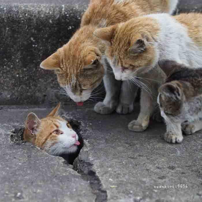 gatos se divertindo nas ruas
