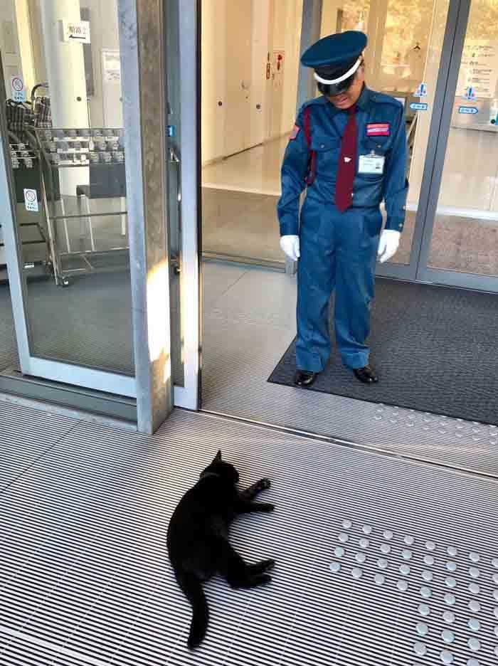 gatos tentam invadir museu
