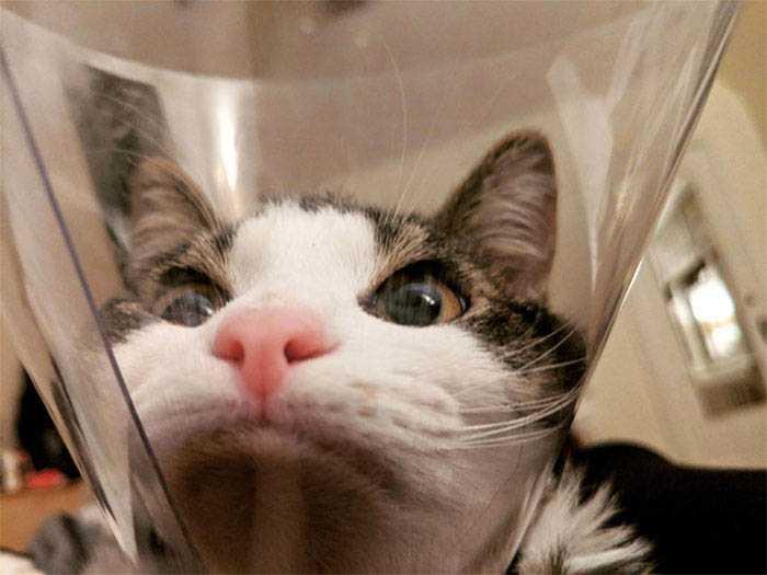 imagens de gatos com cones
