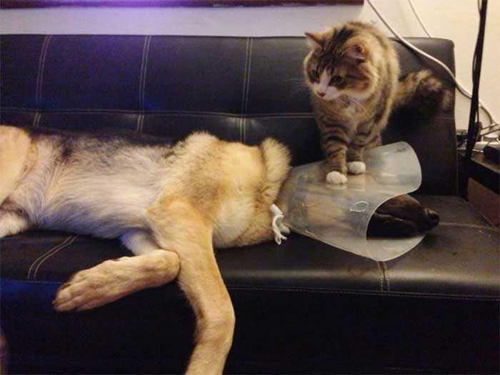 imagens gatinhos com cone da vergonha