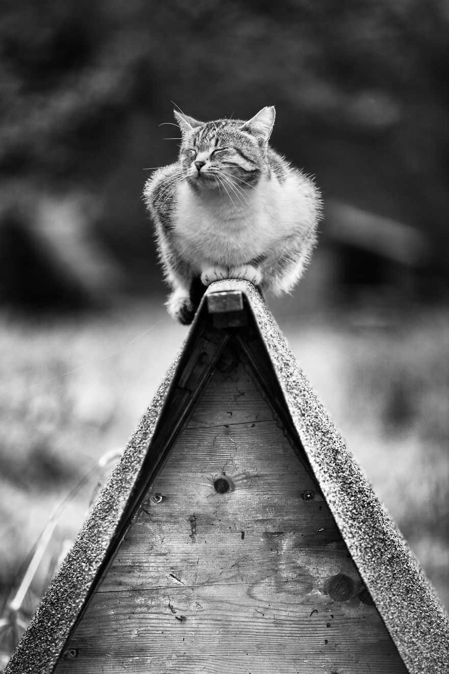 imagens gatos