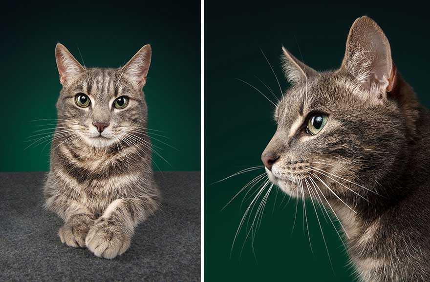 lindas fotos de gatos