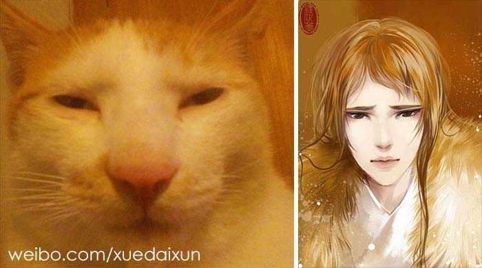 lindos gatos e humanos