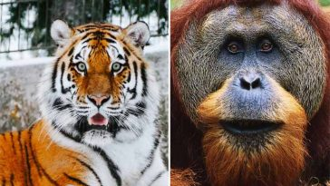 melhores curiosidades incríveis sobre animais