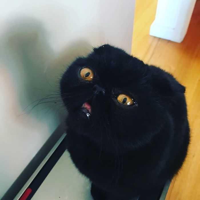 o gato mais engraçado