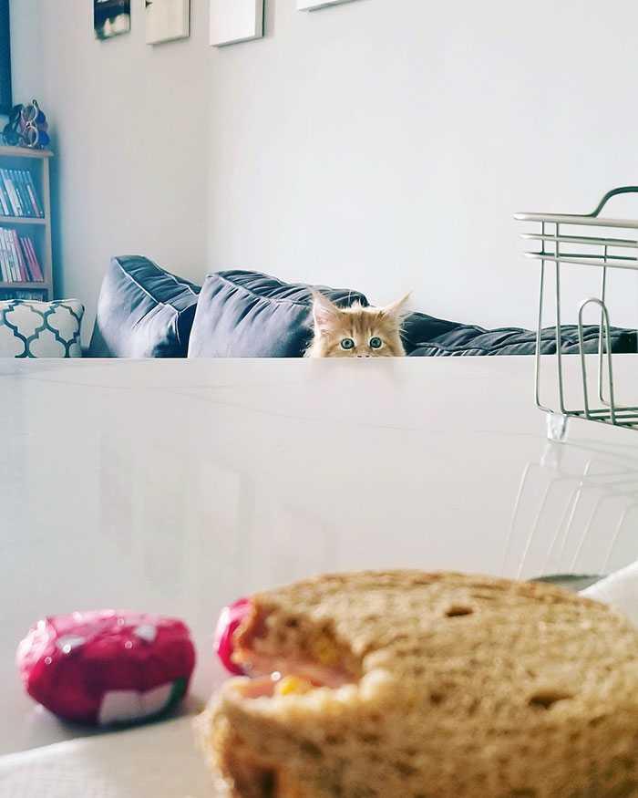 os mais espertos gatos