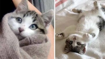Família encontra gatinhos lindos