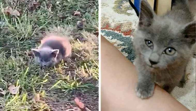 Gatinha encontrada na estrada salva
