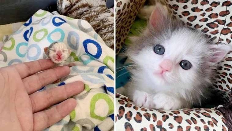 Gatinha minúscula abandonada