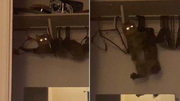 Gatinho aventureiro fica preso