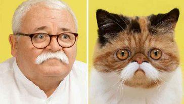 Gatinhos e humanos idênticos
