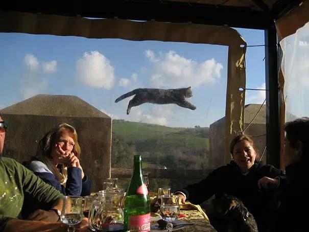 Gatinhos fotografados na hora engraçado