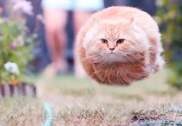 Gatinhos fotografados na hora gatos