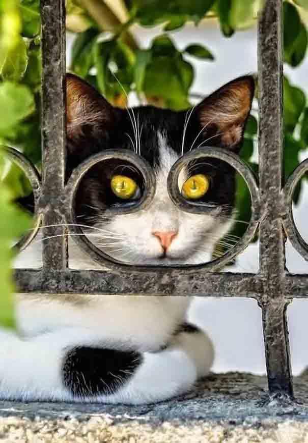 Gatinhos fotografados na hora ideal