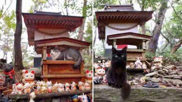 Gatinhos usam santuário sagrado