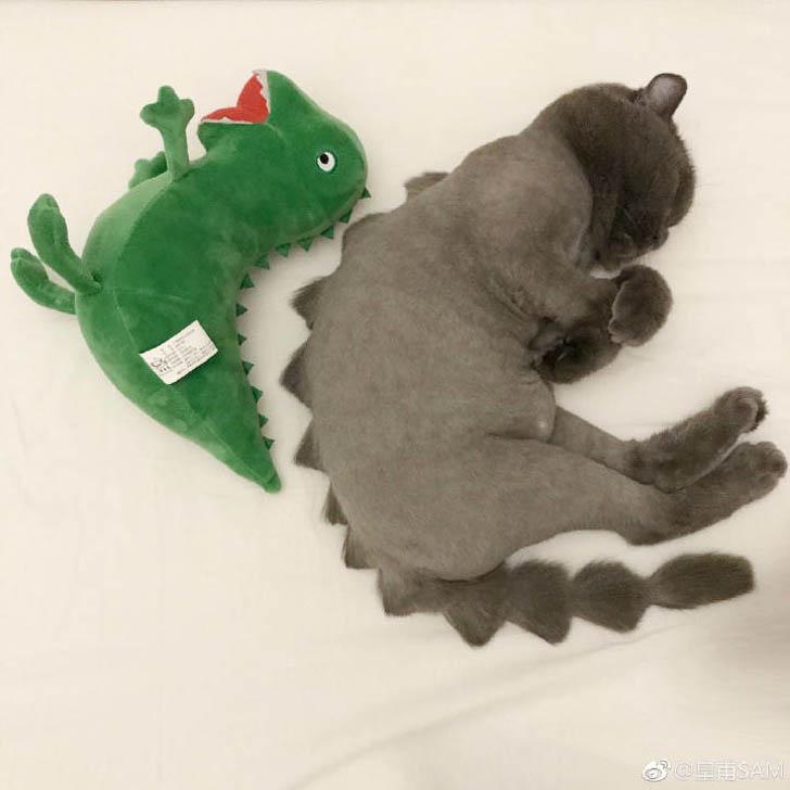 Gatinhos viram dinossauros e dragões fotos