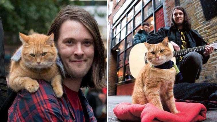 Gato de rua salvou a vida
