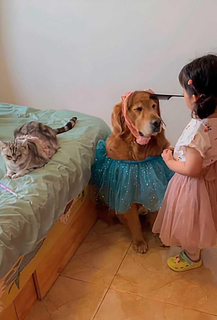 Golden retriever e gatinho e menina