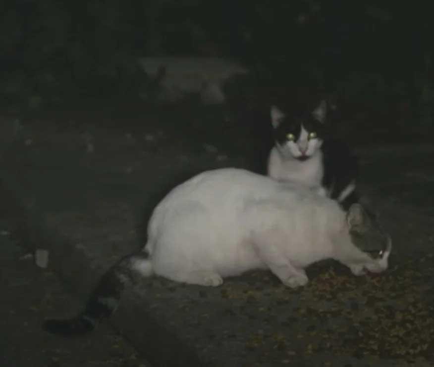 Homem que alimenta gatinhos abandonados rua