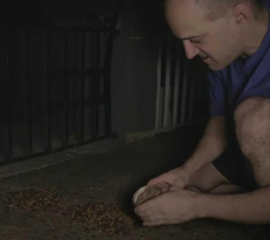 Homem que alimenta gatinhos de rua