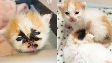 Lindos-gatinhos-foram-salvos