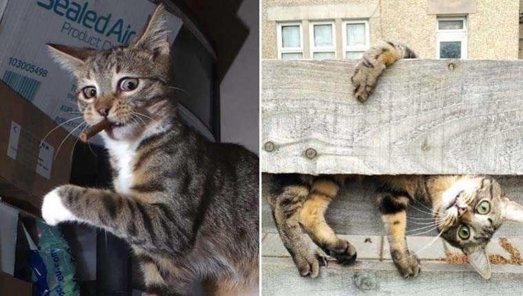 Os gatinhos mais enraçados do mundo