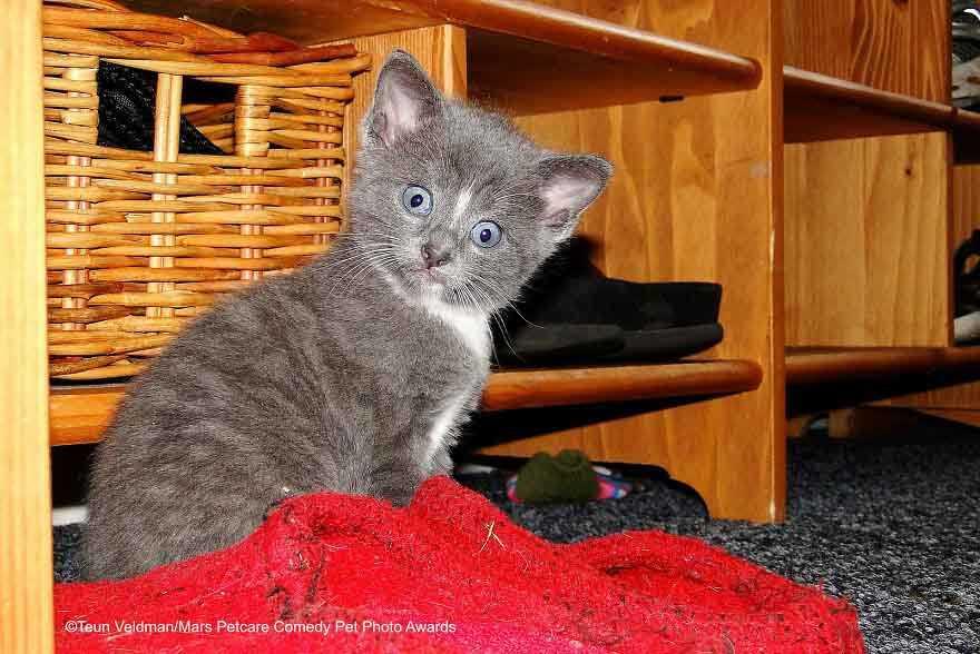 Os gatinhos mais enraçados do mundo em fotos