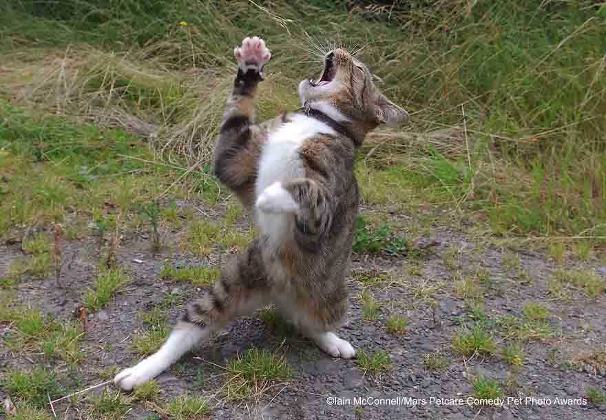 Os gatinhos mais enraçados do mundo premio