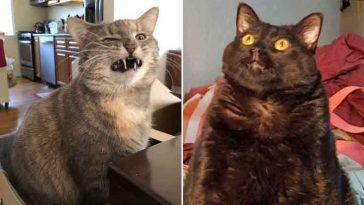 Os gatinhos menos fotogênicos