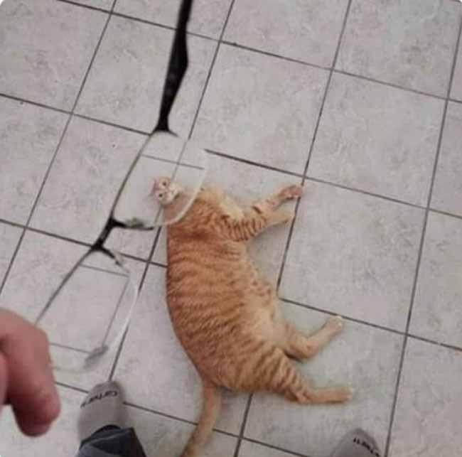 Os gatinhos menos fotogênicos desastrados
