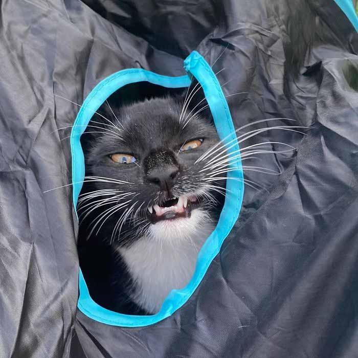 Os gatinhos menos fotogênicos engraçado