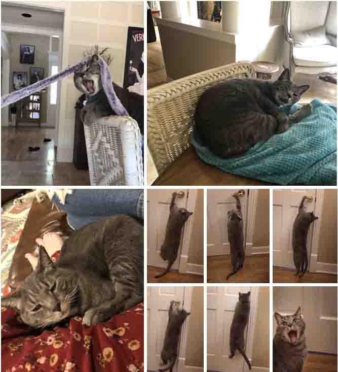 Os gatinhos menos fotogênicos imagens