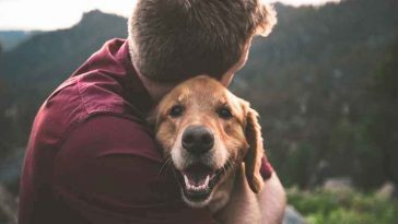 Sonhar com cachorro
