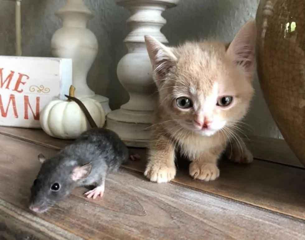 amizade-gato-e-rato
