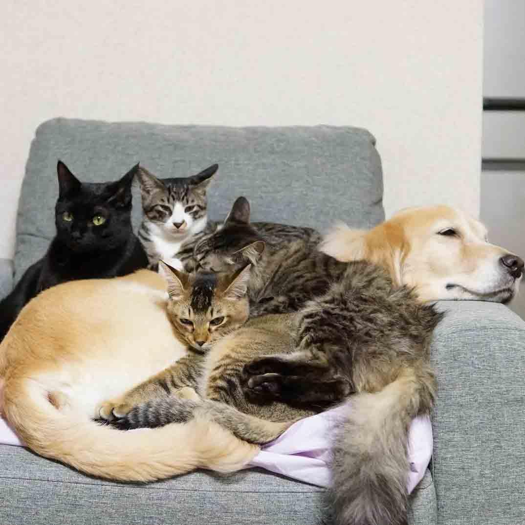 cachorro cuidando de gatos