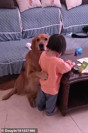 cachorro protege dona