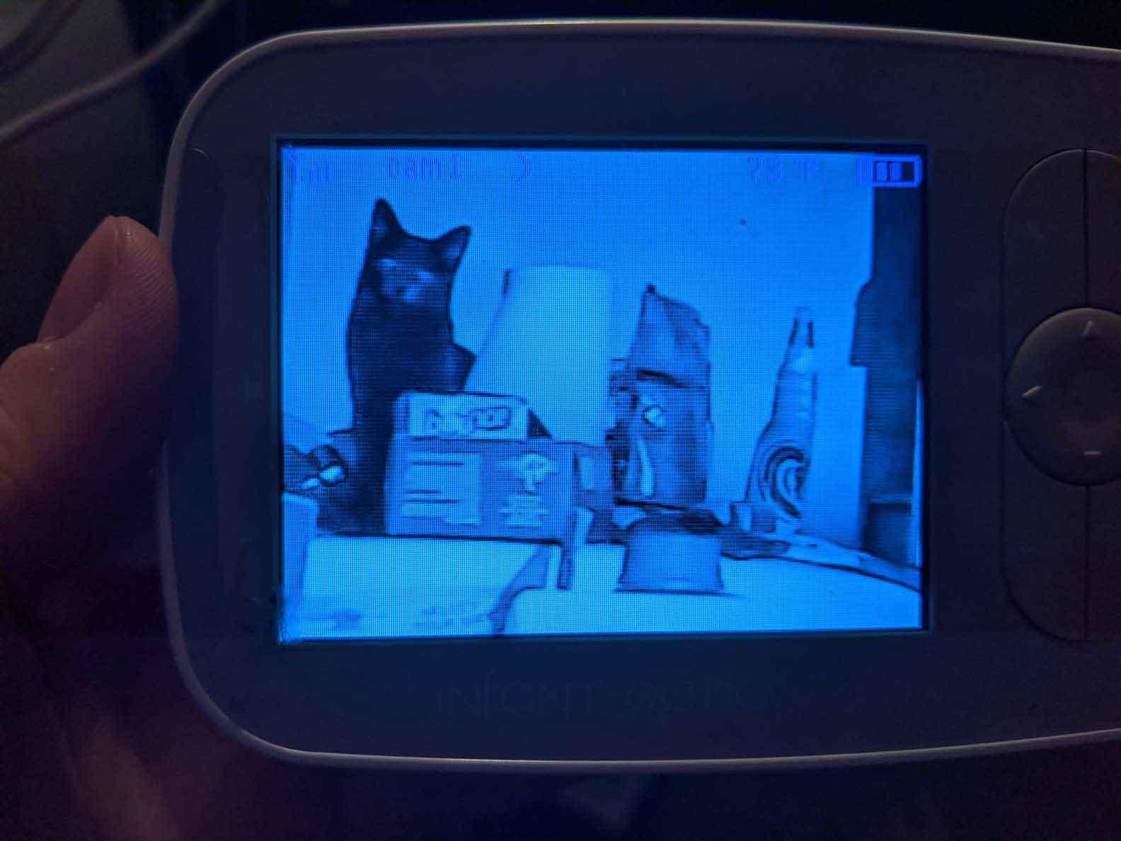 câmera-escondida-gato