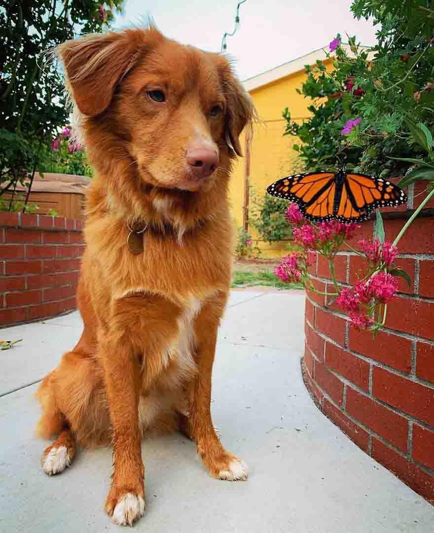 cão lindo