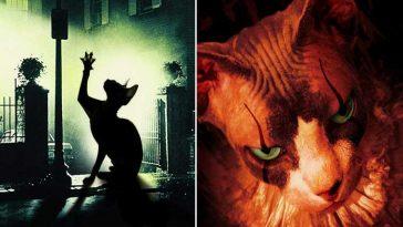 desafio-gatinhos-sphynx-em-pôsteres