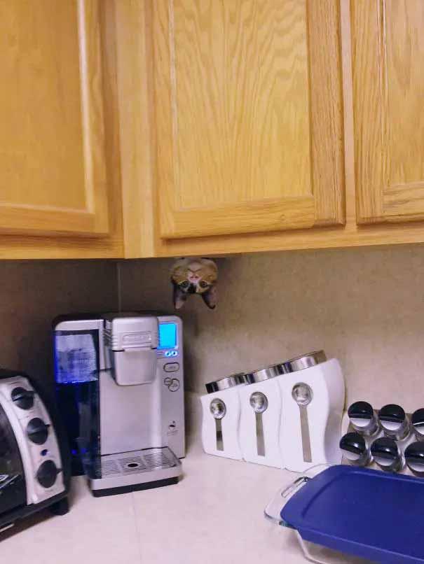 encontre o gato