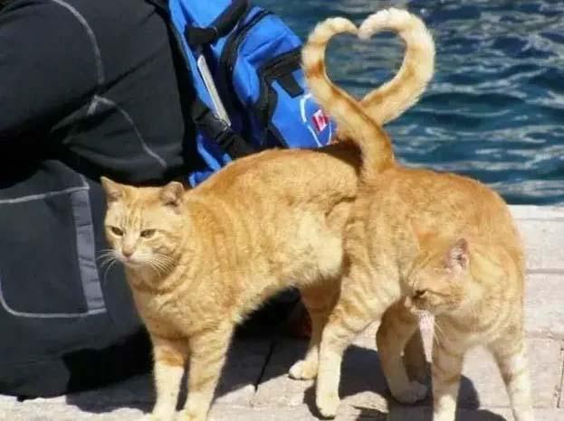foto lindas de gatos