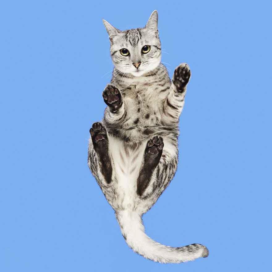 fotos de gatinhos sobre mesas de vidro
